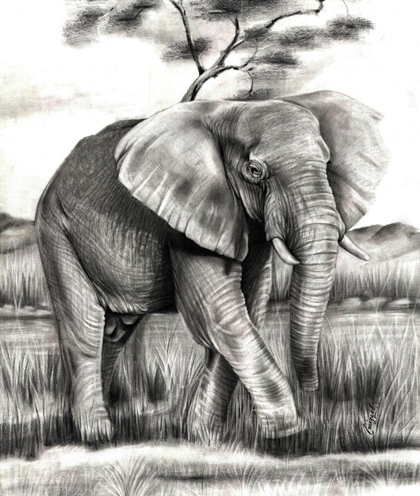 The African elephant by emizael