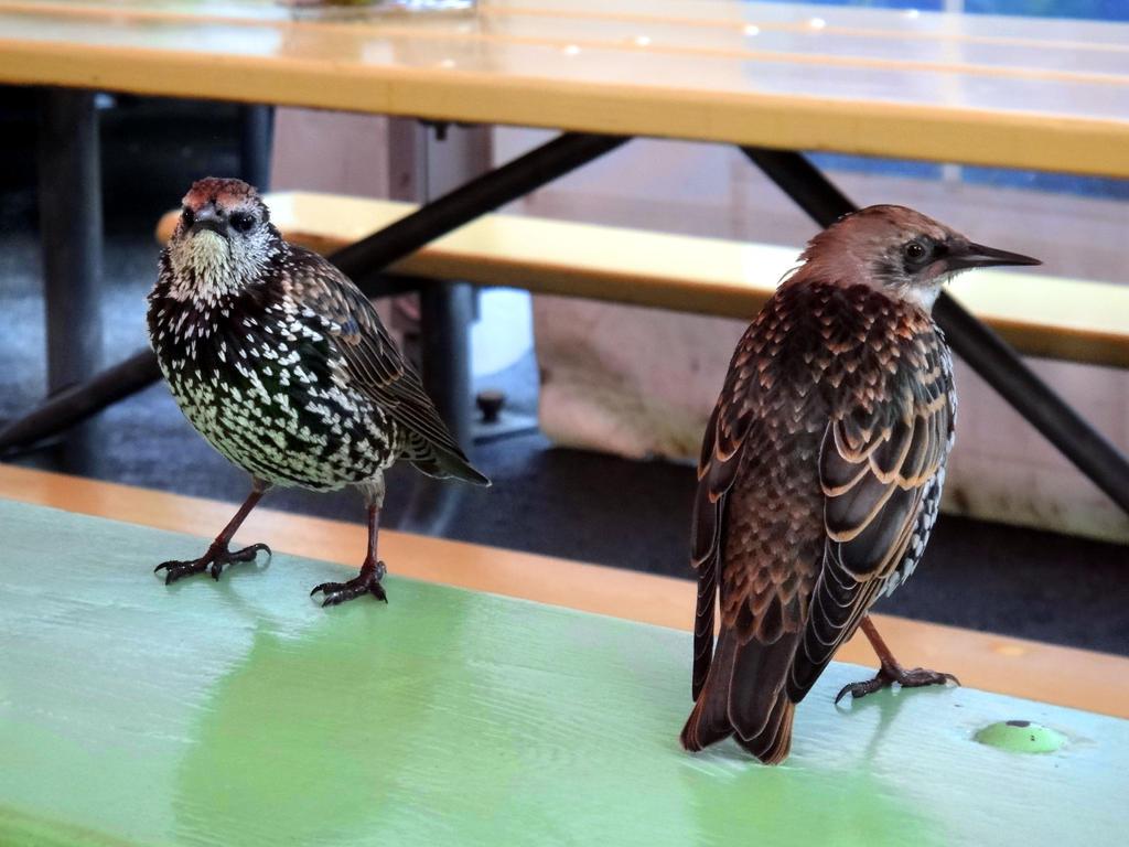 Friendly Birds by emizael