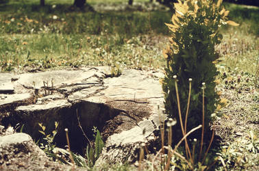 Stump. by MouseMadeOfWheels