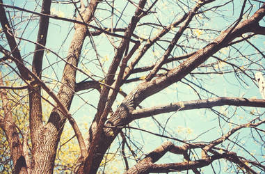 Branches. by MouseMadeOfWheels