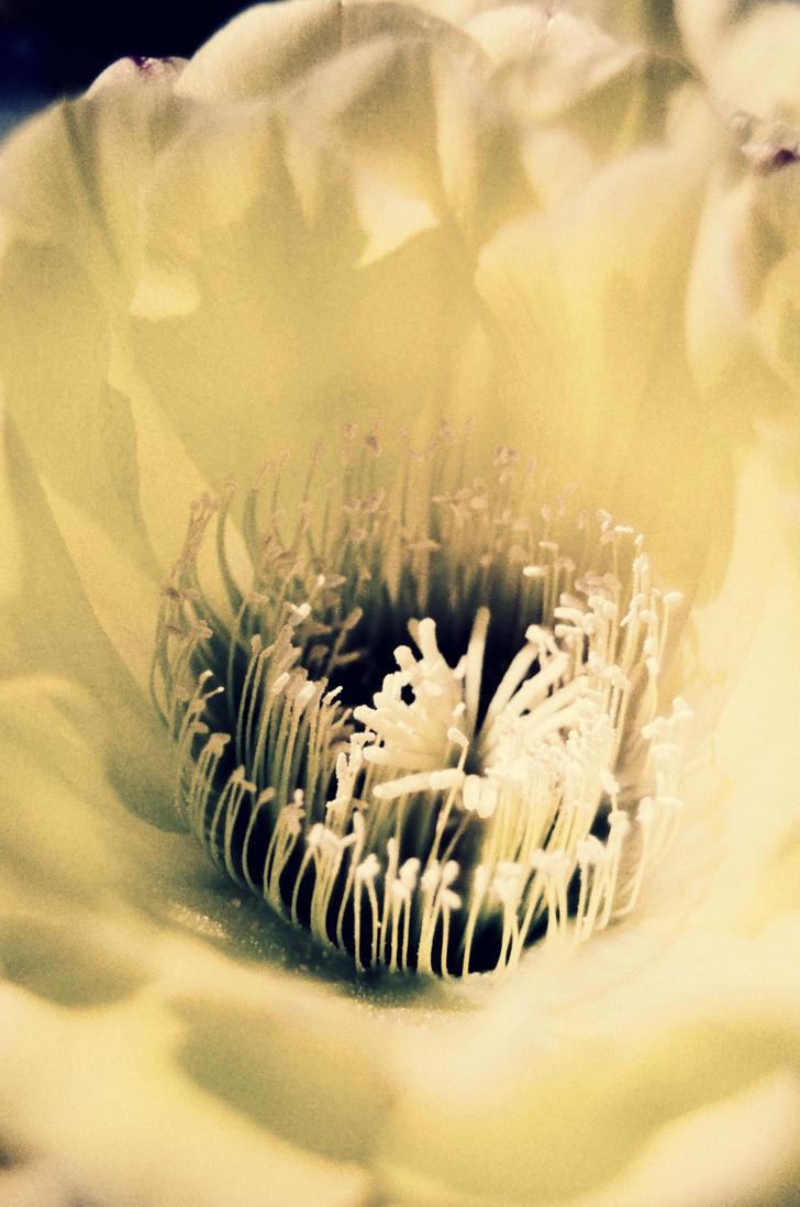 This flower was originally yellow... by TheLewneybin