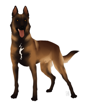 Malinois for SALE!!!AUCTION