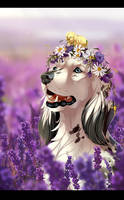 in lavender by Mr-SKID