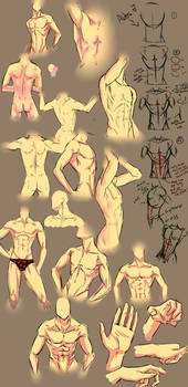 More anatomy tips
