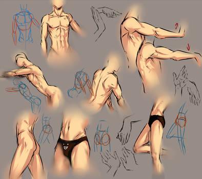 Anatomy practice sheet by moni158