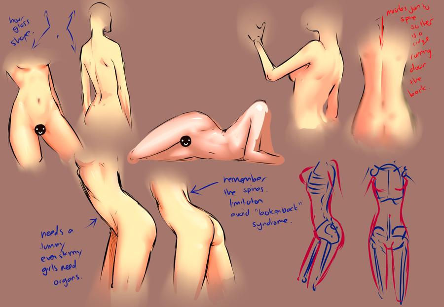 Female body study by moni158 on DeviantArt