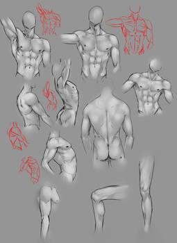 Anatomy practice ..