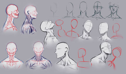 Drawing necks