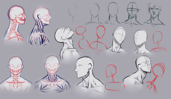 Drawing necks
