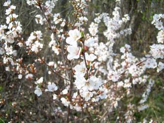 spring is comming by Lindeczek