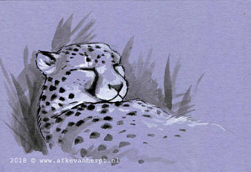 Snoozing Cheetah by afke11