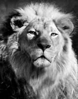 Your Majesty by LedZeppeln