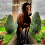 VE William HEE