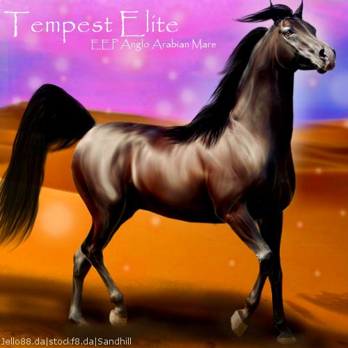 Tempest Elite HEE