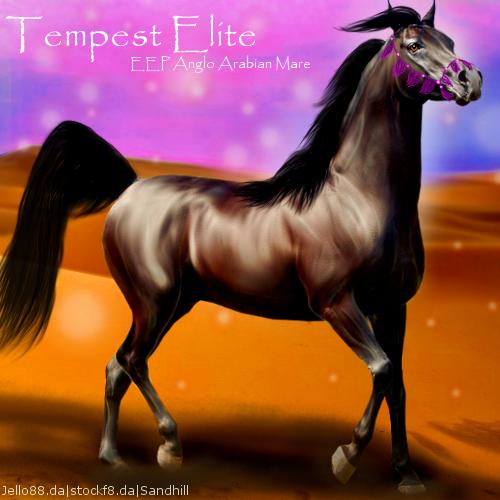 Tempest Elite with halter HEE