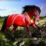 A Champion Bronco HEE