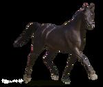 Precut Black Arabian by fillyrox