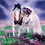 Haezeel-Horse HEE