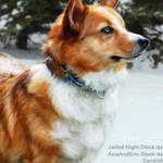 Snow Corgi|HEE
