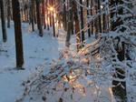 Winter woodland realm I.