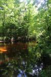 Swamp Stock 3