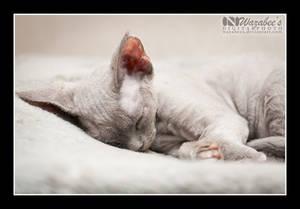 Blue Cherry sleeping