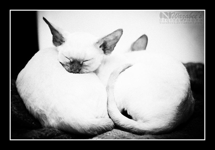 Sleepy Kittens by wazabees