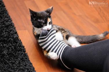Stripy feet must die