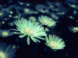 Night Light Daisies