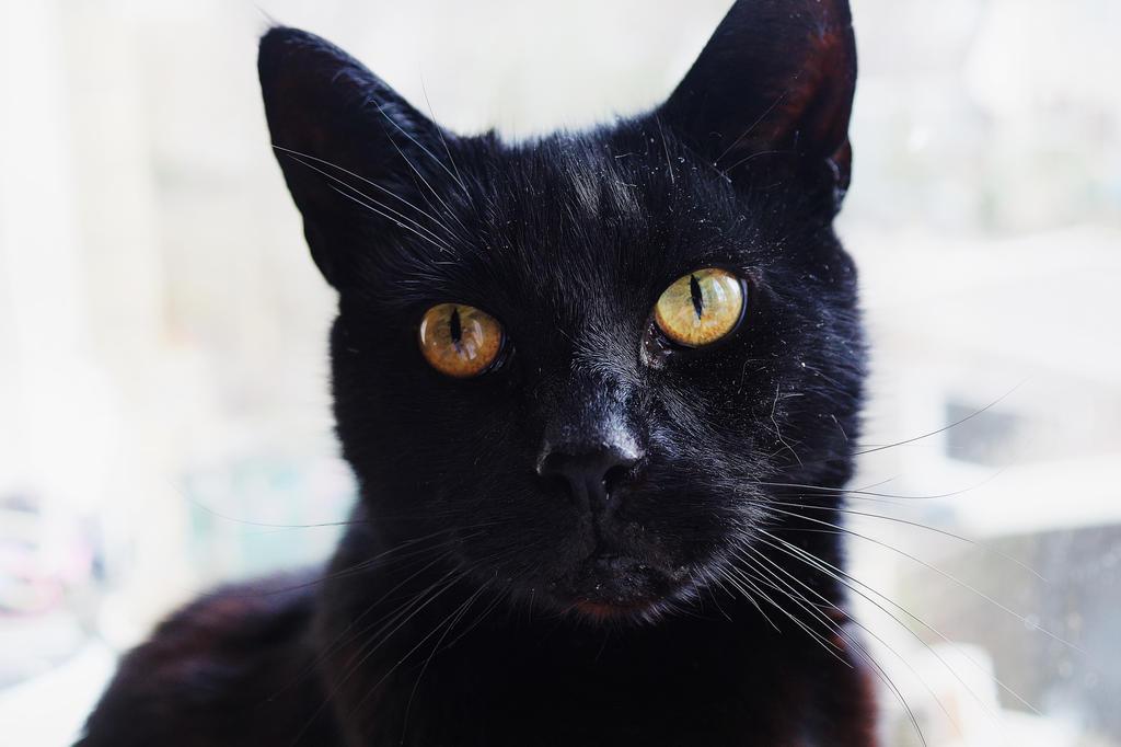 Handsome by KittenKayleigh