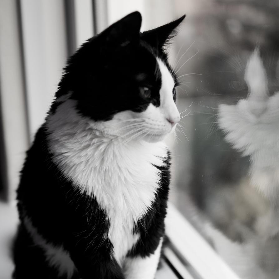 look by KittenKayleigh