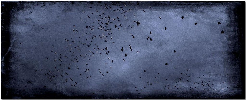 Clouds of birds... by ansdesign