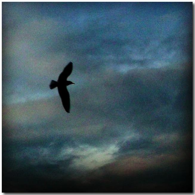 Bluebird... by ansdesign