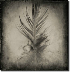 Feather...
