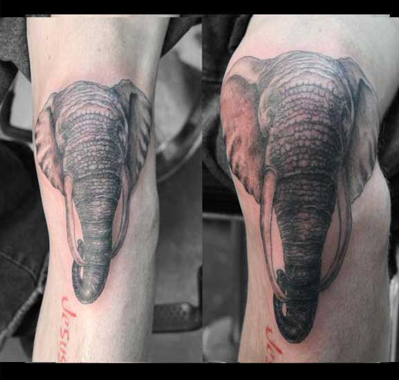 Elephant penis tattoo picture