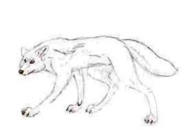 Wolf by Goldy-Goldenwolf