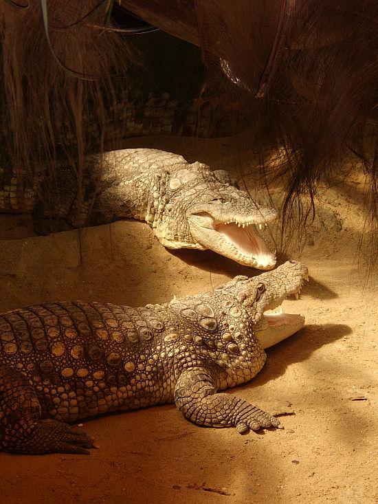 crocodiles by xyzetka