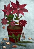 Poinsettia by chuckometti