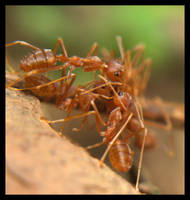 ants by xaveME