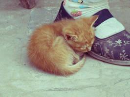 cat  3 by youxiandaxia