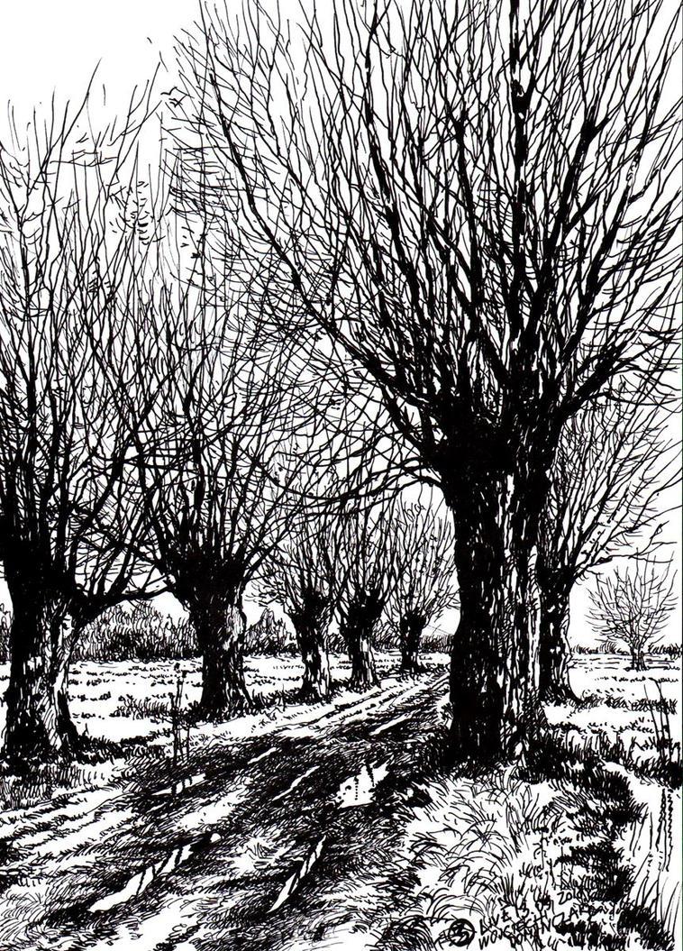 Masovian Willows by Dominczak