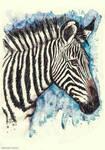 Grevy zebra watercolor