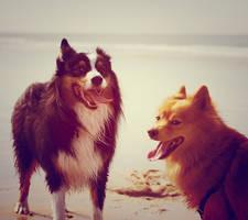 Doggies.