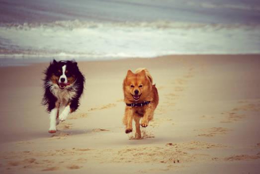 Doggies 2.
