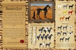 Saandur - Breed sheet by Efirende