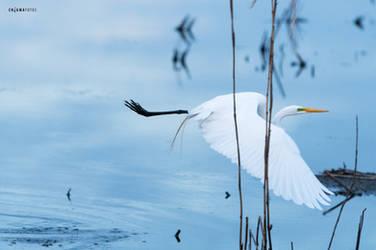 Crane in Flight by Enigma-Fotos