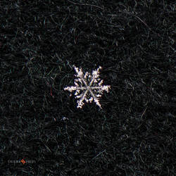 A Lonely Snowflake