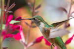 a hummingbird being a humming bird