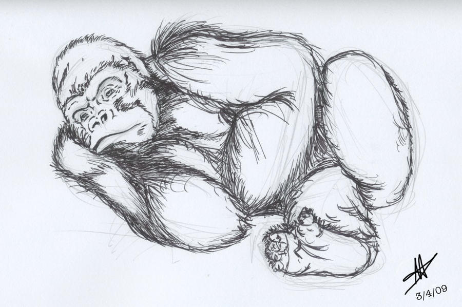 Silverback Gorilla Face Drawing