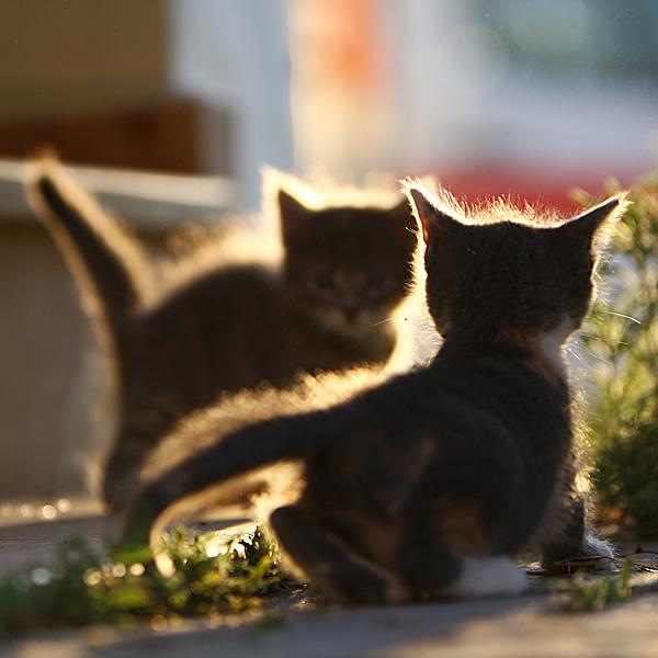 Cherry sisters ll by serhatdemiroglu